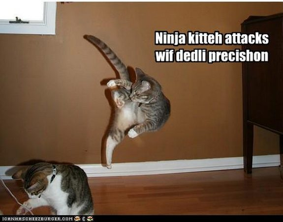 hilarious karate animals 01 in 26 Hilarious Karate Animal Moves