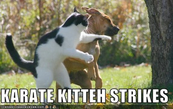 hilarious karate animals 05 in 26 Hilarious Karate Animal Moves