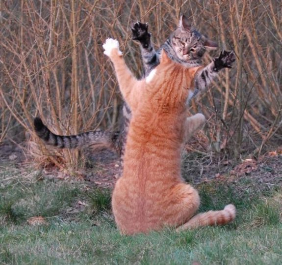 hilarious karate animals 07 in 26 Hilarious Karate Animal Moves
