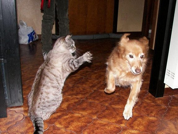 hilarious karate animals 10 in 26 Hilarious Karate Animal Moves