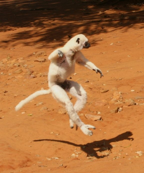 hilarious karate animals 13 in 26 Hilarious Karate Animal Moves