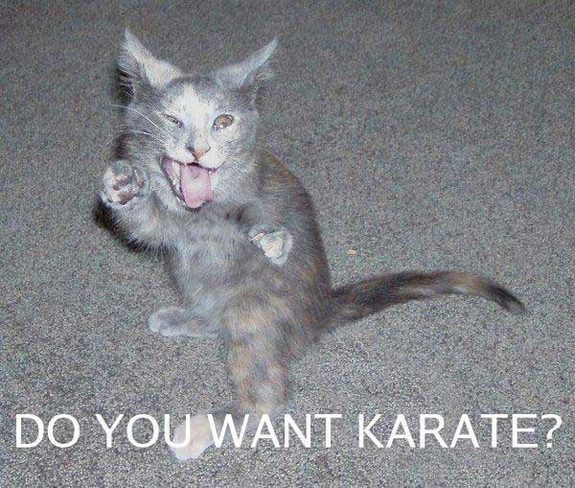 hilarious karate animals 14 in 26 Hilarious Karate Animal Moves