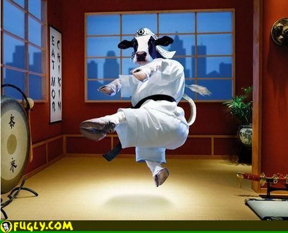 hilarious karate animals 15 in 26 Hilarious Karate Animal Moves