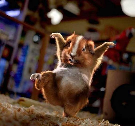 hilarious karate animals 16 in 26 Hilarious Karate Animal Moves