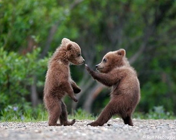 hilarious karate animals 17 in 26 Hilarious Karate Animal Moves