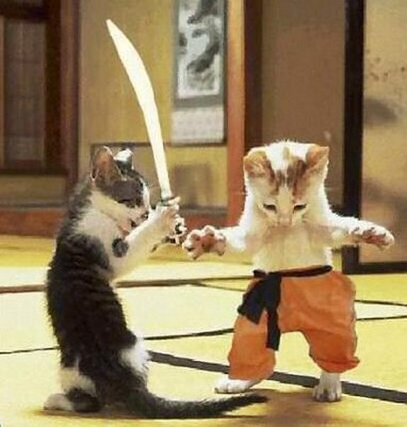 hilarious karate animals 20 in 26 Hilarious Karate Animal Moves