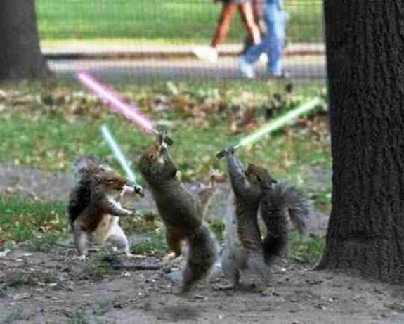 hilarious karate animals 25 in 26 Hilarious Karate Animal Moves