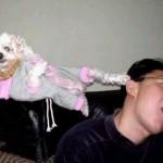 karate-pup