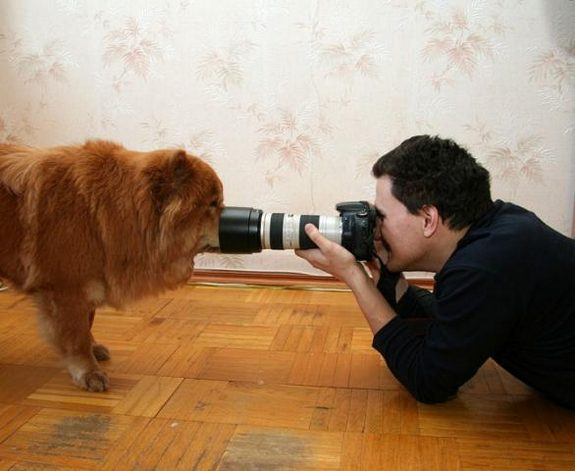 funny photographers 14 in 36 Photographers That Would Do Everything to Get That Photo Right