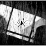 22-spooky-photos-21
