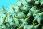 world-coral-photography-08