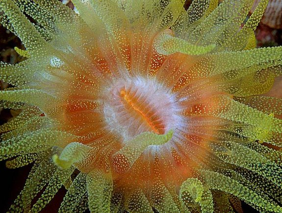 Out of this World Coral Photography