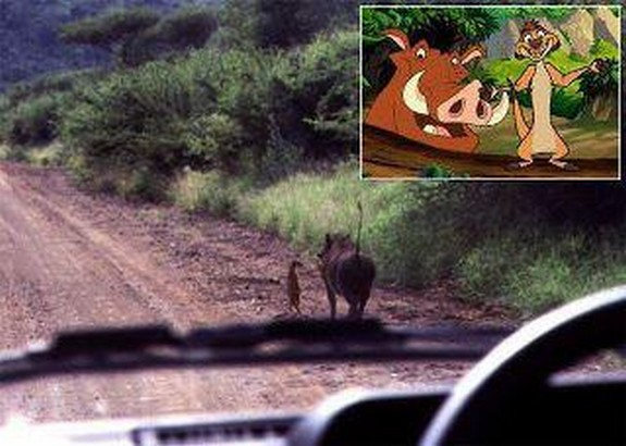 are cartoons copying reality 01 in Real Life Scenes Mimicking Famous Cartoon Scenes