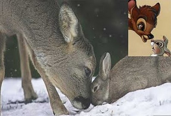are cartoons copying reality 05 in Real Life Scenes Mimicking Famous Cartoon Scenes
