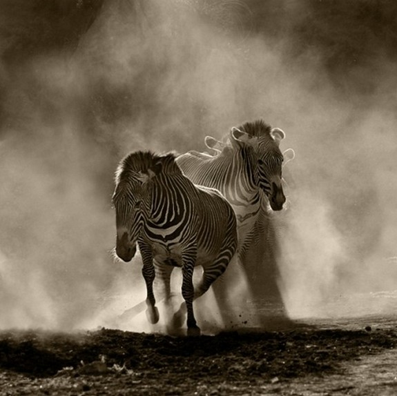 beautiful examples of animals photography 02 in Top List of Most Beautiful Animal Photographs Ever Captured