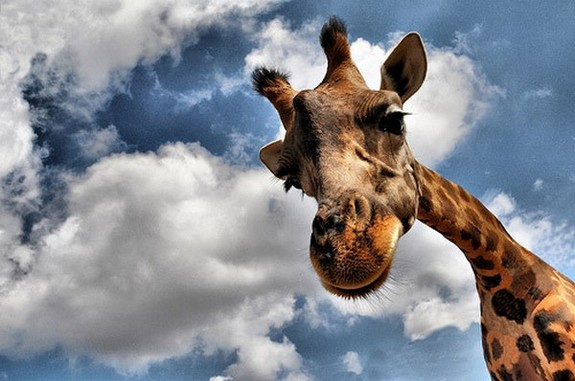 Top List Of Most Beautiful Animal Photographs Ever Captured