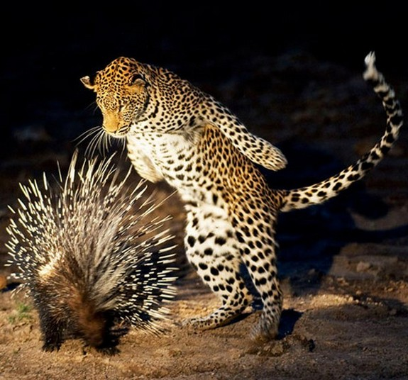 beautiful examples of animals photography 08 in Top List of Most Beautiful Animal Photographs Ever Captured