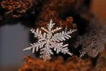 great-photos-of-flakes-03