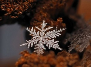 Magical Snow Flakes: Macro Photography