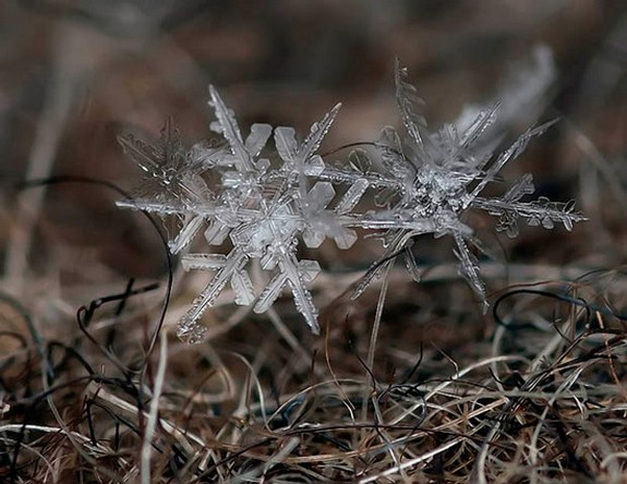 great photos of flakes 01 in Magical Snow Flakes: Macro Photography