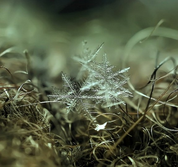 great photos of flakes 04 in Magical Snow Flakes: Macro Photography