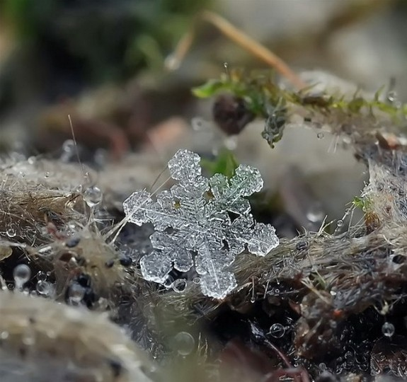 great photos of flakes 05 in Magical Snow Flakes: Macro Photography