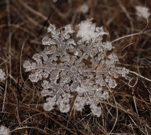 great photos of flakes 06 in Magical Snow Flakes: Macro Photography