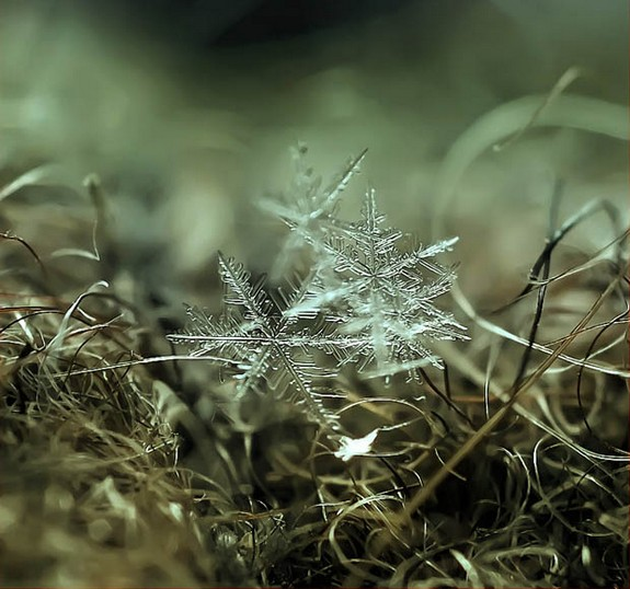 great photos of flakes 07 in Magical Snow Flakes: Macro Photography